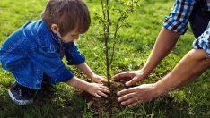 Yeni Yıla Ağaç Keserek Değil Fidan Dikerek Girelim