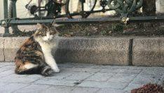 Eskişehirliler sokak hayvanlarını unutmuyor