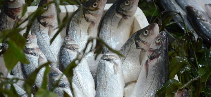Su ürünleri üretimi geriledi