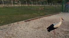 Yavru leyleğe köpek barınağı sahip çıktı