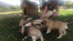 Şikayet 5 yavru köpeği annesiz bıraktı