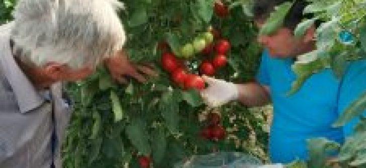 Sebzelerde ilaç kalıntısı denetimi