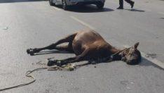 Yüzlerce kiloluk atlar kazanın etkisiyle böyle havaya uçtu