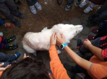 Sokak köpeği artık minik öğrencilere emanet