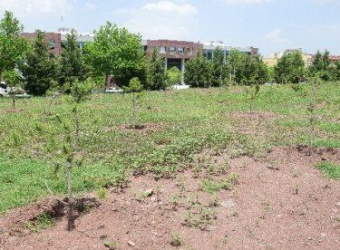 ESOGÜ kampüsüne 350 yeni ağaç fidanı dikildi