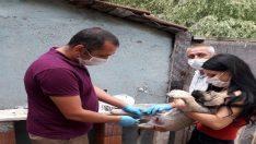 Odunpazarı Belediyesi ile hayvanseverlerin işbirliği