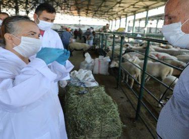 Kurban Bayramında Eskişehir'de 70 bin 815 hayvan kesildi