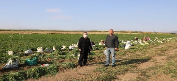 Eskişehir'de üretilen havuç zincir marketlerde satılacak